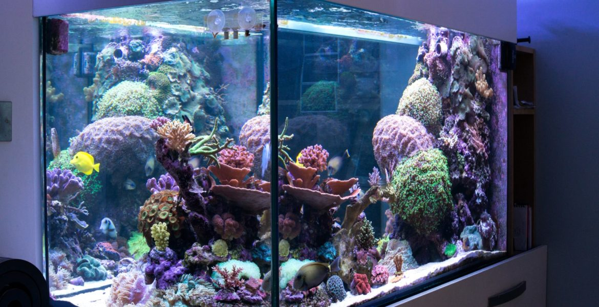 Mark Angold's 750 Litre System