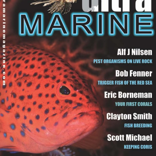 UltraMarine Magazine Issue 1 Cover