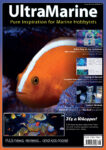 UltraMarine Magazine Issue 82